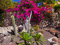 Jungle park at Tenerife Canary Royalty Free Stock Photo
