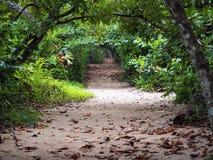 Into jungle path stock photos