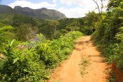 Jungle path in Masoala park Stock Photo