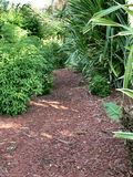 Jungle path. Forest path covered in red mulch royalty free stock photos