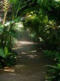 Jungle path. Misty rain forest path Stock Photography