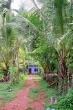 Jungle Path and Blue House Stock Photography