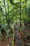 Jungle path in Borneo Stock Images