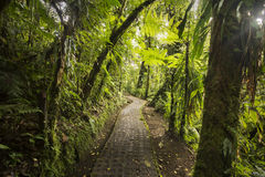 Jungle path from the Costa Rican cloud-forest Stock Images