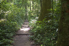 Jungle path Stock Photos