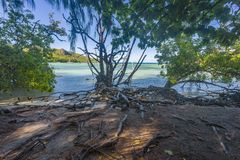 Jungle on Curieuse island, Seychelles Stock Photography