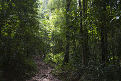 Jungle path Stock Photography