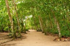 Jungle path Stock Image