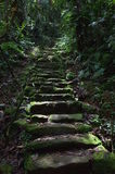 Jungle path. A stone path leads through the jungle on the way to Colombia`s Lost City stock image