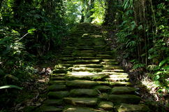 Jungle path. Jungle stone path on the wy to The Lost City in Colombia royalty free stock image