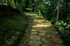 Jungle path. Jungle stone path on the wy to The Lost City in Colombia Stock Images