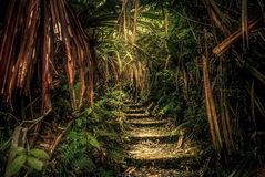 Jungle path in Sumatra Stock Photo