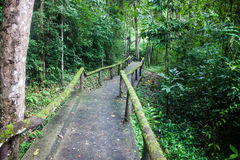 Jungle path Stock Images