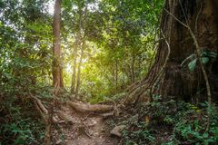 Jungle path in tropical rainforest background. Jungle path, trail in tropical rainforest background Stock Photos