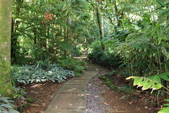 Jungle pathway Stock Images