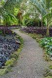 Jungle Pathway Stock Photo