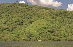 Jungle peru Stock Image