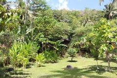 Jungle. Philippines palawan jungle treck Green Stock Photos