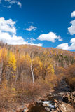 Jungle. This photo was taken in a fall noon, in northeast China Royalty Free Stock Photography