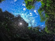 The jungle photographed from the bottom up - Pala U Waterfall Hua Hin Thailand. This unique photo shows a view upwards in the Thai jungle called also Hua Hin royalty free stock photography