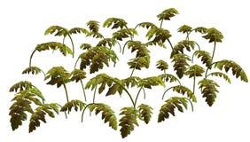 Jungle Plant Royalty Free Stock Image