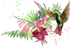Jungle plant, bird and flowers. Hummingbird. rain forest watercolor illustration. Stock Photo