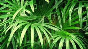 Jungle Plants In Breeze. Closeup of large tropical plants swaying in the wind stock footage