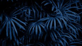 Jungle Plants Swaying At Night. Dense jungle plants in the dark stock footage