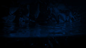 Jungle Plants Waterline At Night. Exotic plants above and below the waterline in the dark stock footage