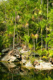 Jungle pond Stock Images
