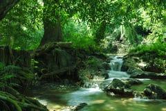 Jungle pond Stock Photography