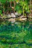 Jungle pond Royalty Free Stock Photography