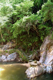 Jungle Pool. Privat Jungle Swimming Hole in Mexico Stock Image