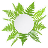 Jungle poster. Fern frond background. Vector illustration Royalty Free Stock Photos