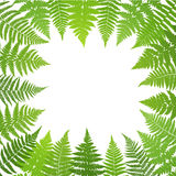 Jungle poster. Fern frond background. Royalty Free Stock Image