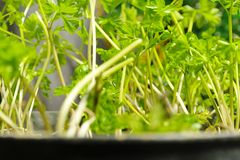 Jungle in a pot Stock Image