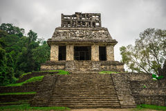 Jungle Pyramid Structure. Ancient staircase and pyramid in the middle of the jungle, palenque mexico Royalty Free Stock Photos
