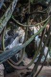 Jungle at Railay Royalty Free Stock Photos
