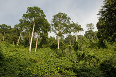 Jungle - rainforest Royalty Free Stock Images