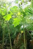Jungle rainforest atmosphere green background Royalty Free Stock Image