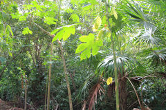 Jungle rainforest atmosphere green background Stock Images