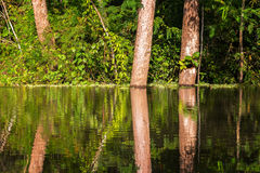Jungle Reflection View Stock Photography