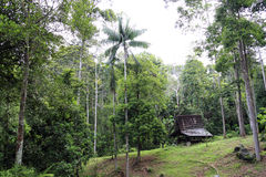 Jungle retreat. An image of a retreat hut in the middle of a secondary tropical forest royalty free stock photography