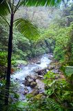 Jungle river. Tropical rainforest with mountain river. Costa Rica Royalty Free Stock Photo