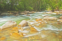Jungle River Royalty Free Stock Images