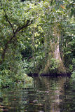 Jungle river. A river in bushy jungle, costa rica Stock Image
