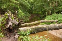 Jungle river stock image