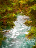 Jungle river Stock Images