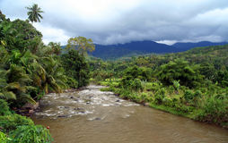 Jungle river Royalty Free Stock Photos