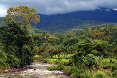 Jungle river Royalty Free Stock Photography